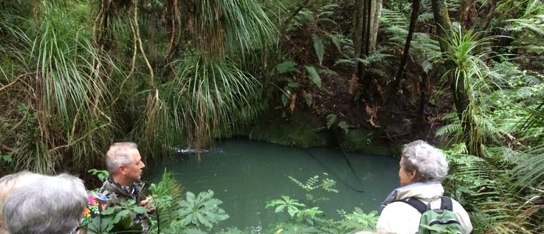 Paroa Bay Surprise - Walk 3 - BOI Walking Weekend