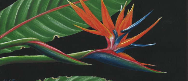learn to draw bird of paradise in oil pastel workshop