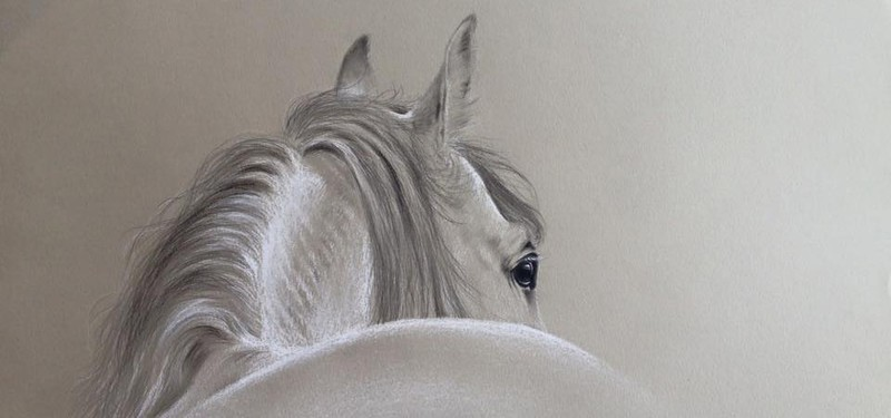 Learn to draw horse in pencil workshop