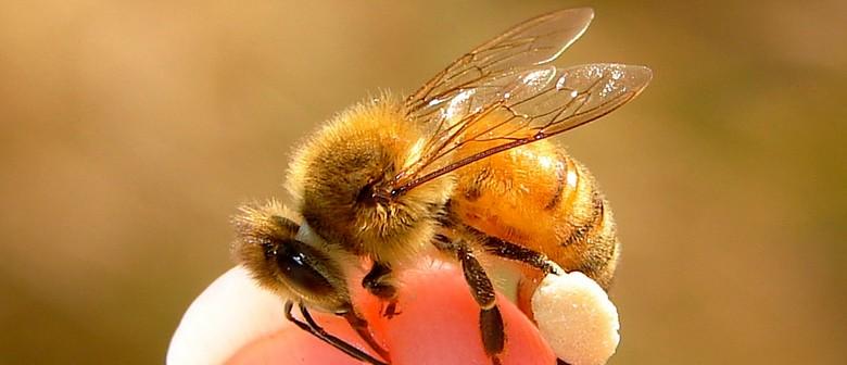 Bee Awareness Morning