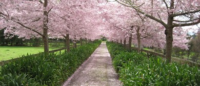 Waikato Cherry Tree Festival: SOLD OUT