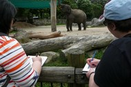 Image for event: Sketching Animals At the Zoo