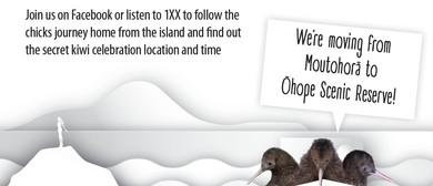 Whakatane Kiwi Project Chick Celebration