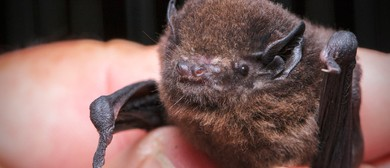 Bats, Dactylathus and Other Fascinating Things