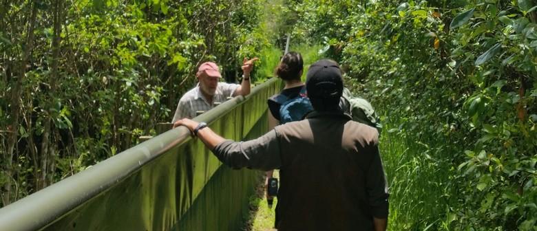 Bushy Park Volunteering Days