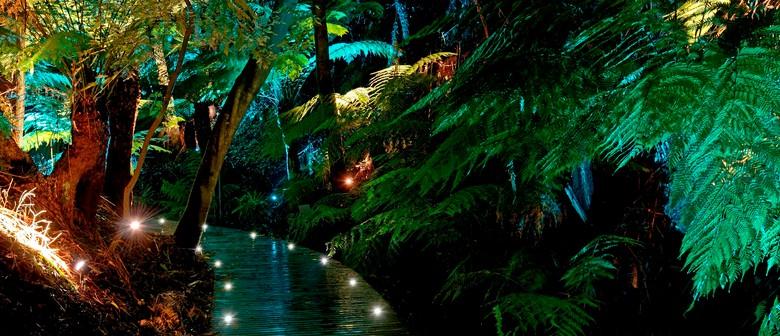 Ara Mai – Night-Walk