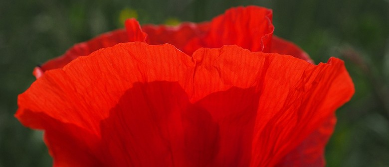 Local History Week - Poppy Places Street of Significance