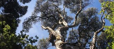 Tree-mersion