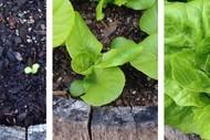 Edible Gardening for Beginners (Part 1)