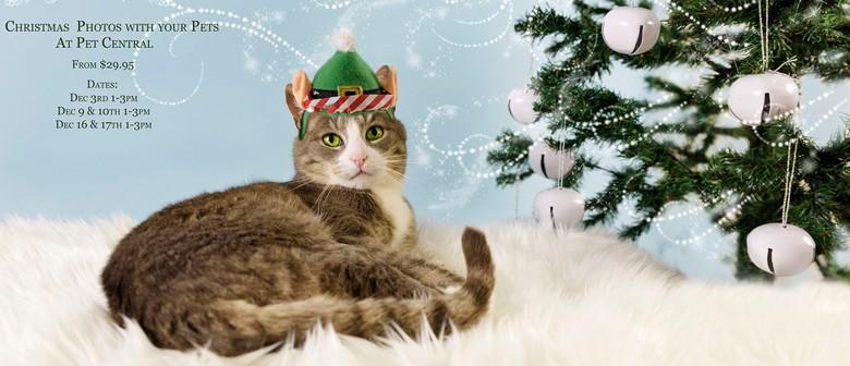 Pet Christmas Photos