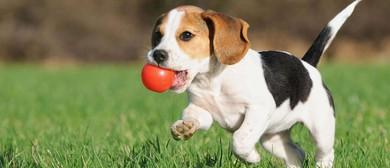 5 Week Dog Training Class