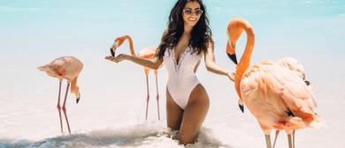 Single & Ready to Flamingle