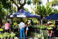 Napier Urban Farmers Market - ADF18