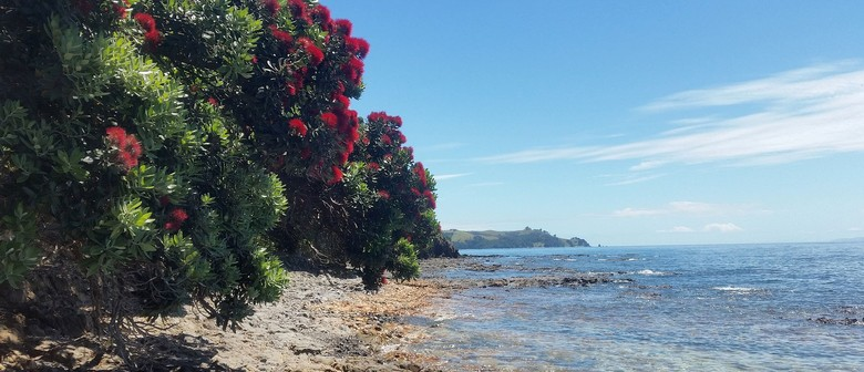 Native Plant Biodiversity: A Botanical Look At Rotoroa Islan