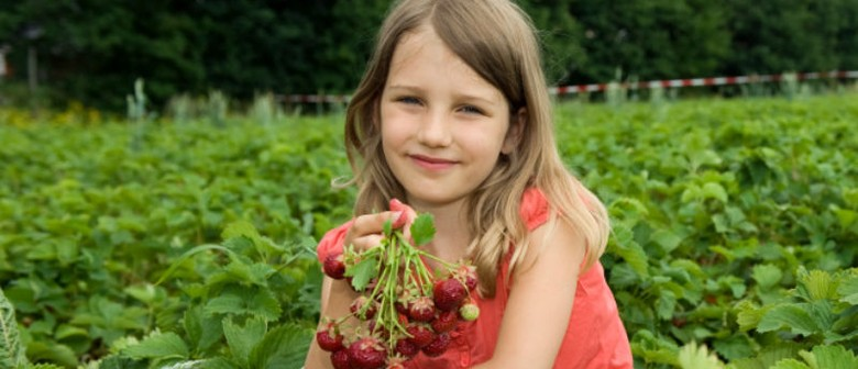 Pick Your Own Strawberries for Hospice