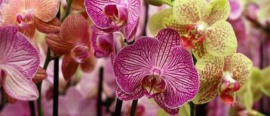 Tauranga Orchid Auction