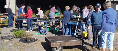 Friends of Waiwhakareke - Potting Working Bees