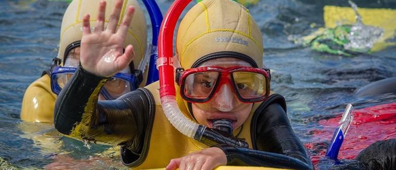 Seaweek - Titahi Bay Community Snorkel