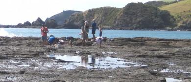 Seaweek - Beachcomber Explore