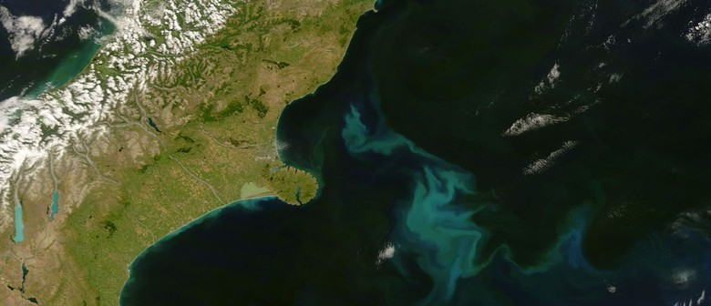 Seaweek - Beautiful Phytoplankton