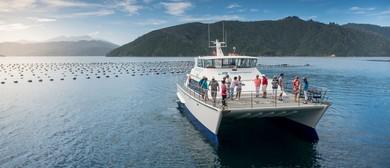 Post Festival Seafood Odyssea Cruise
