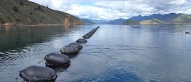 Fishing Trip Following Mussel Harvester