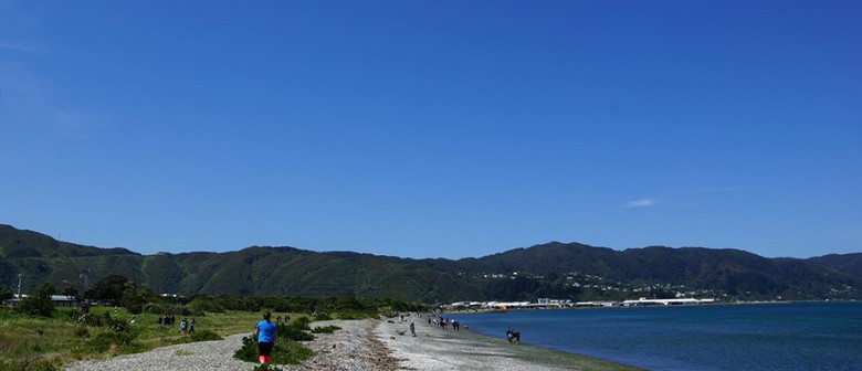 Seaweek – Kupe Landing: Petone Beach Clean-up