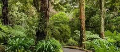 Otari Seminar Series: Success of Restoration Planting In NZ