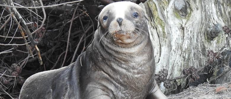 Seaweek - Sea Lion Show