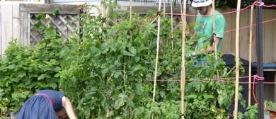 Matai Community Garden Party
