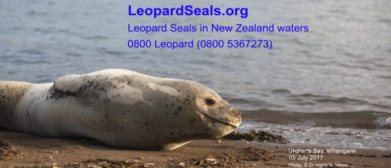 Leopard Seals in NZ Waters With Dr Ingrid Visser