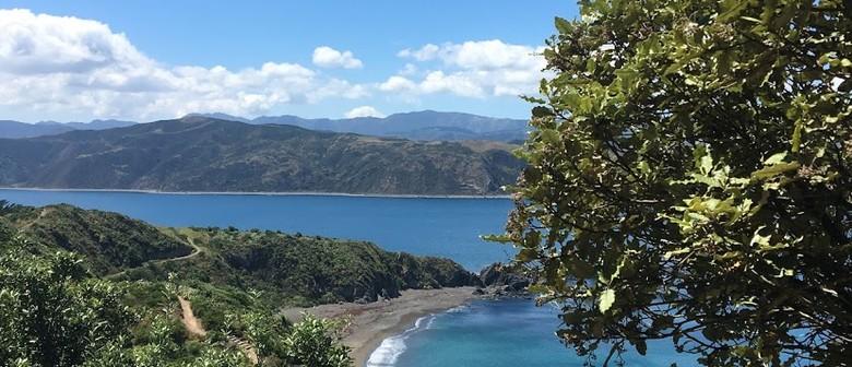 Parks Week - Guided Walk: Oruaiti Reserve/Breaker Bay