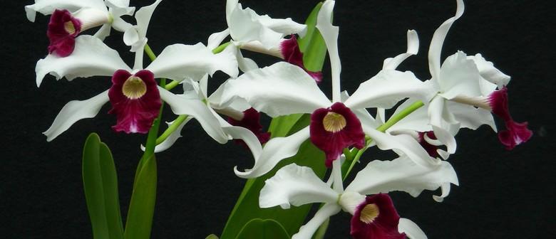 Manawatu Orchid Society Autumn Show
