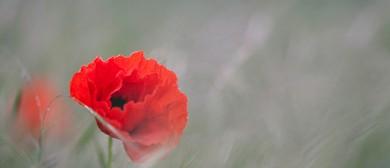 ANZAC Day Dawn Service - Seddon