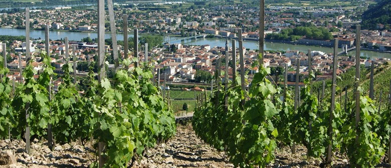 Exploring Wine: The Rhone Valley of France
