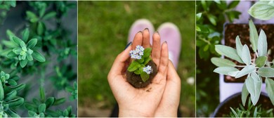 How to Grow Healing Herbs and Enhance your Health
