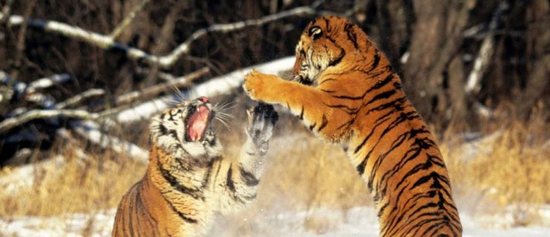 Qigong Fitnes Class: Wild Animal Play
