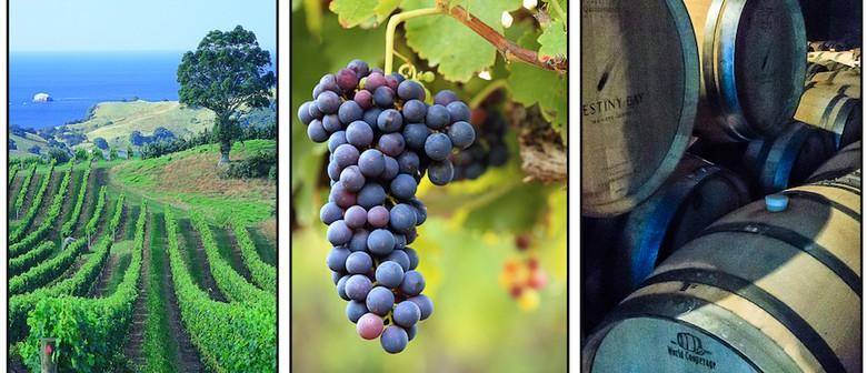 Waiheke Wine & Photography