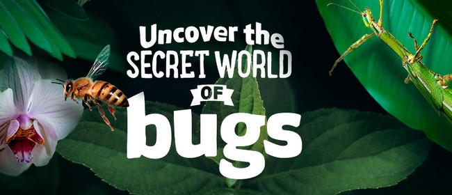 Uncover the Secret World of Bugs!