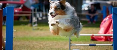 Blenheim Canine Training Club Agility & Jumpers Champ Show