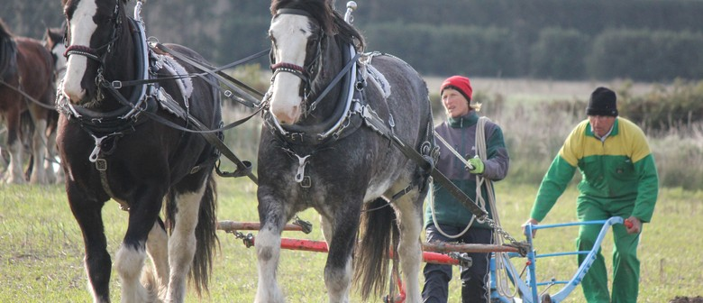 Annual Vintage & Clydesdale Ploughing Matches