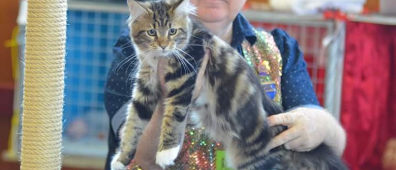 Longhaired Cat Breeders Association Cat Show