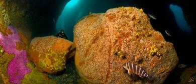 Revealing the Hidden Jewel in the Kapiti Island Crown