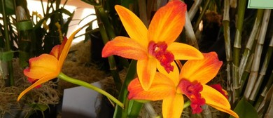 Hibiscus Coast Orchid Society's Winter Display