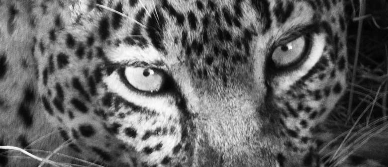 Safari - An Exhibition of Photographs by Tony Minett