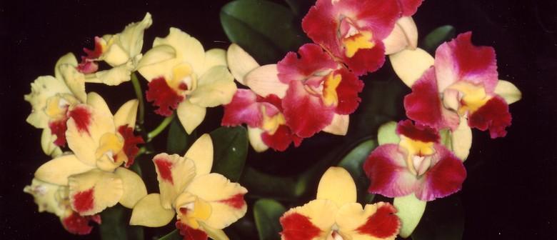 Autumn Orchid Show