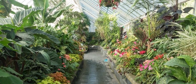 Guided Walk: Escape to The Tropics
