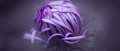 Small World - Macro Photography Workshops for Beginners