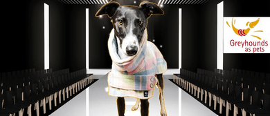 Greyt Fashions - Greyhounds Model Their Coats and Clothes