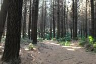 Castle Peak Forest Half Marathon, 12k & 6k Trail Run